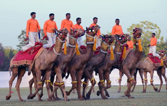 Camel Race on Rajasthan Diwas 2017