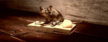 Cheddar mouse