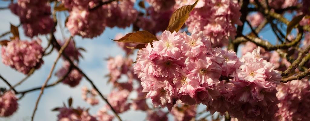 Оксфорд: пролетно-академично