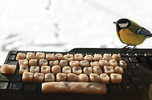 Twitter оживя с гласа на птиците