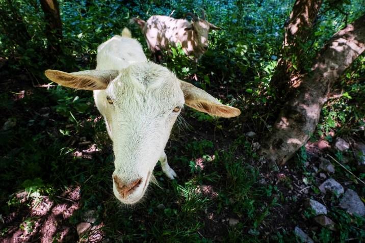козата софия лорен