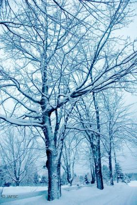 Awesome view of snowed trees