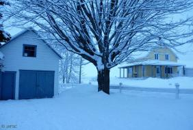 I like this solemn tree besides my garage. At the back my west neighbour