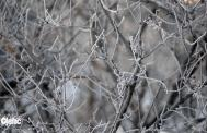 Iced branches from my yard