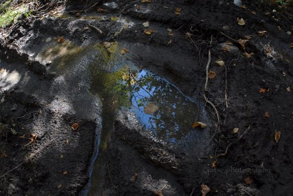 The puddle II
