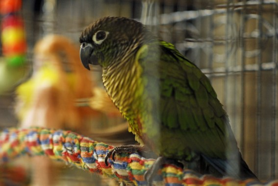 My new parrot in his birdcage