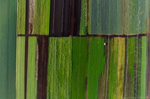 An aerial view of cash crops growing in the rich soil of the Holland Marsh
