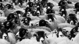 pixabay herd immunity
