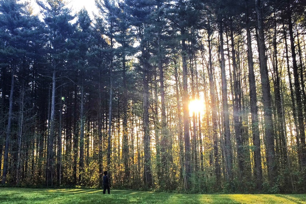 Blackbird State Forest, Smyrna, Delaware how do solo travelers get such good pictures http://vaycarious.com