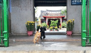 dogs at a Buddhist temple in Hoi An, Vietnam Vaycarious.com
