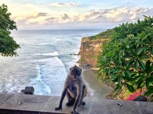 Bali Monkey vaycarious.com