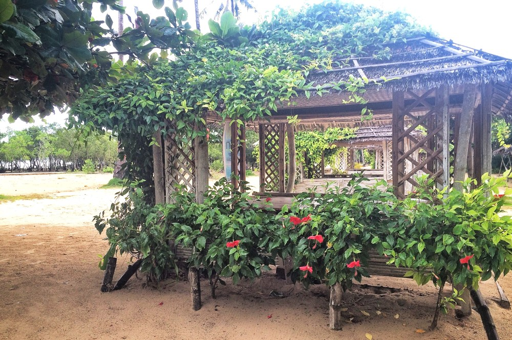 Flowers on Palawan Island https://vaycarious.com/2017/02/1/flowers