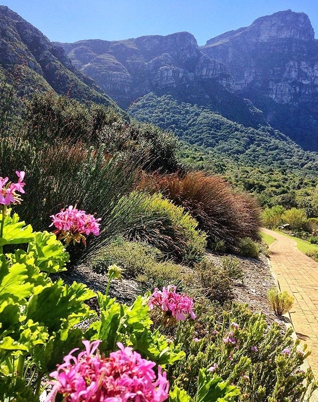 Kirstenbosch Botanical Gardens - 10 Tips for Travel to South Africa vaycarious.com