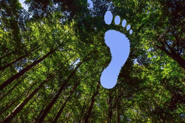 Carbon Footprint, What Colour Are You?