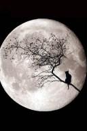 Kitty-Moon