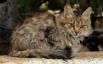 How to Recognize Pain in Aging Cats | VCA Animal Hospital