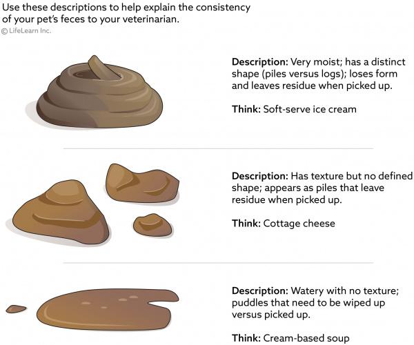 Pin By Teresa Hwa On Vet Tech Skills Soft Serve Ice Cream Shapes