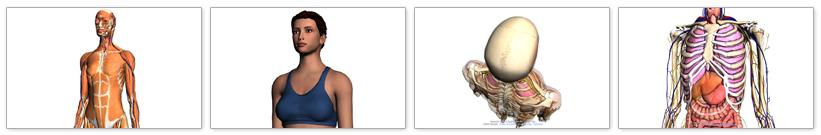 bodybrowser.googlelabs.com