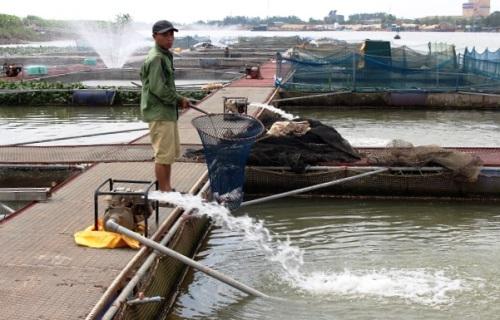 Sau khi vớt hết cá chết, đưa máy bơm vào chạy tạo khí oxy, hiện tượng cá chết giảm dần như hết. Ảnh: Trần Tuấn