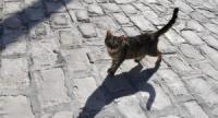 Девушку парализовало, после того как она погладила бездомную кошку