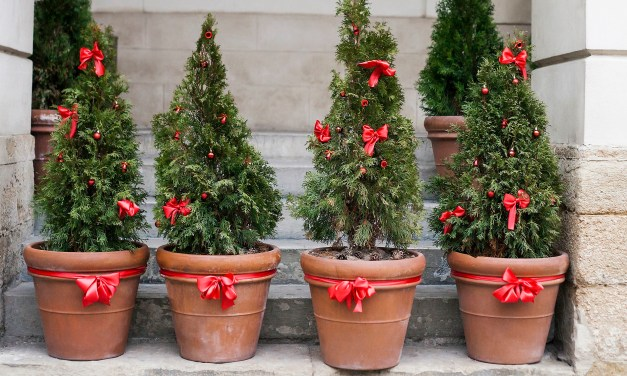 EYE ON THE ENVIRONMENT | Local tree lover finds alternative to either artificial or cut Christmas tree