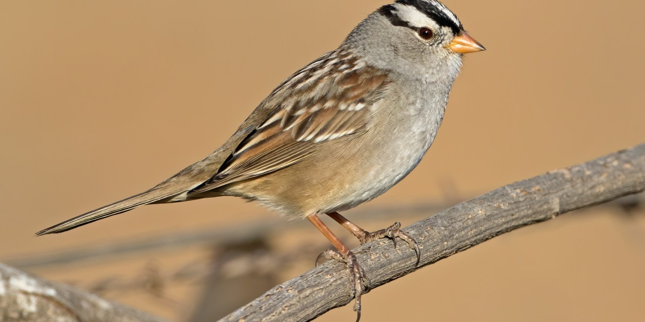 JOIN THE CHRISTMAS BIRD COUNT ON JAN. 4 | Citizen scientists help track bird populations