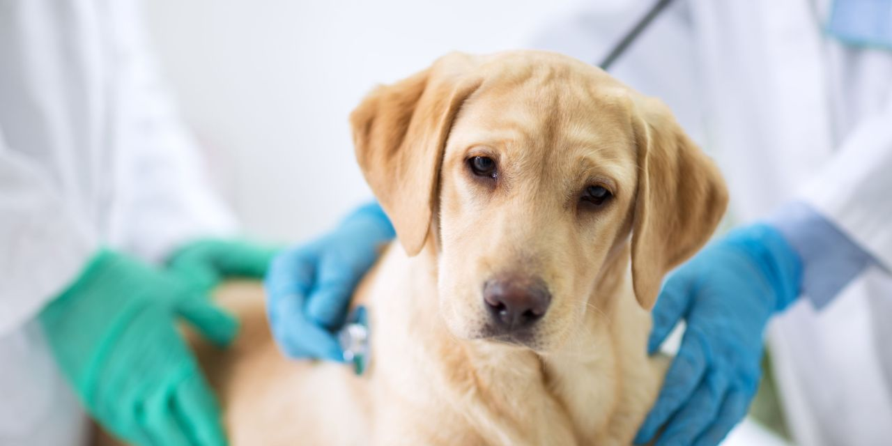 PETS AND THE PANDEMIC | Vets continue to care for animals in the face of COVID-19
