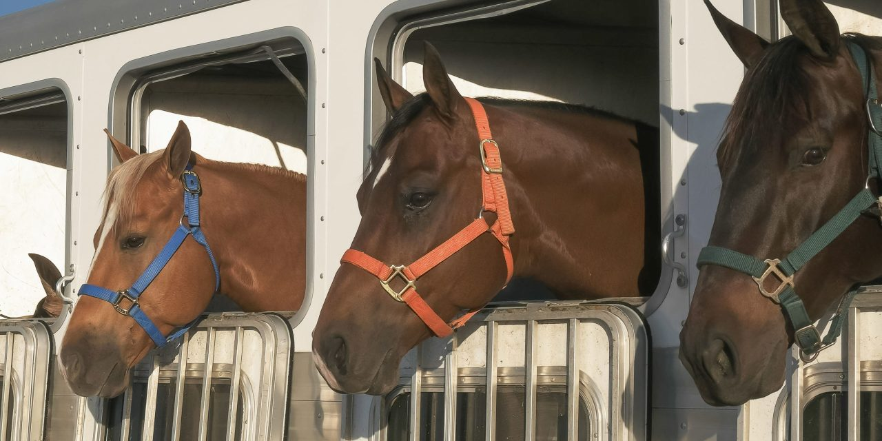 PREPARE YOUR PETS FOR EVACUATIONS | Get go-bags ready and practice trailer loading