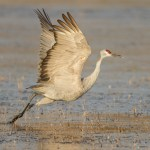 Crane takes flight