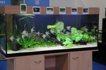 Aquarium am VDA-Stand_resize