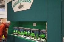 Ausstellung von Aquarium Hellersdorf_resize