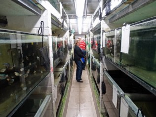 14 Beeindruckend die riesige Aquarien-Verkaufsanlage NK Tropical Fish