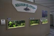 Die Aquarien vom Verein Hellersdorf