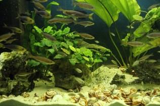 Tanganjika-Aquarium_resize