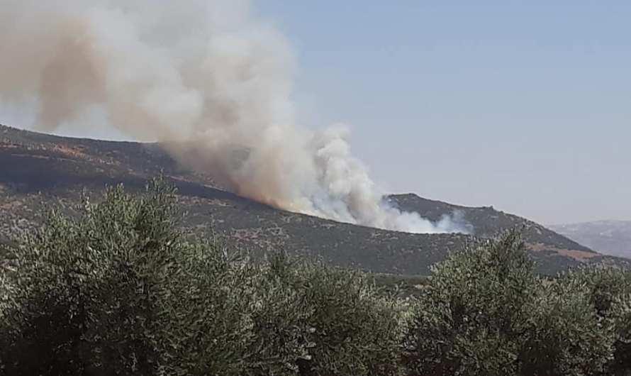 عفرين: استمرار حرائق الغابات وأشجار الزيتون وكروم العنب