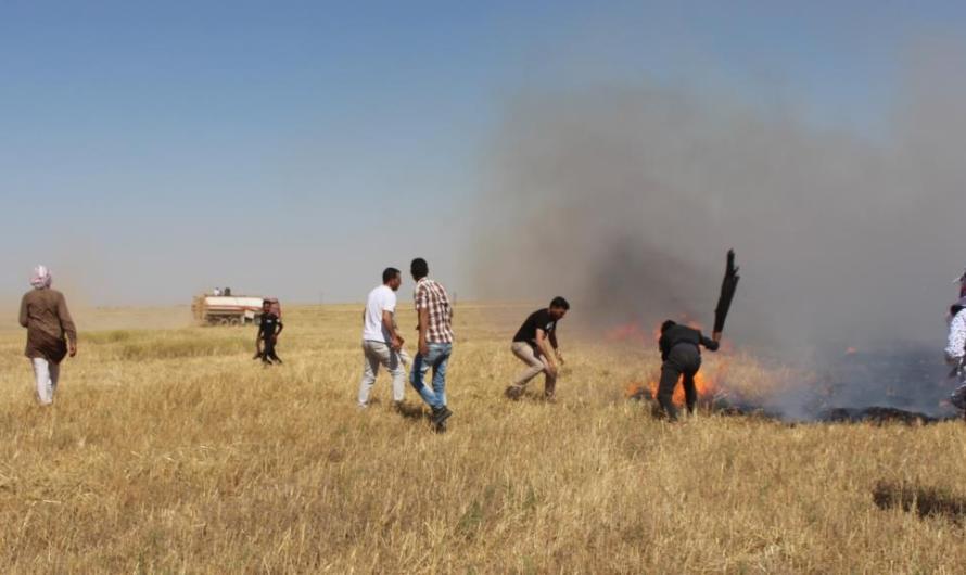أنقرة تُحرّض على حرق المحاصيل في شمال سوريا… احتراق 130 ألف هكتار والخسائر 5 مليون دولار