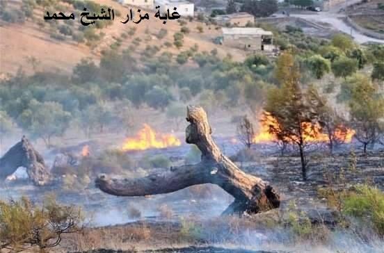 مستوطنون يحرقون الغابات في عفرين.. قوات الاحتلال التركي منعت تحرك الأهالي لإطفائها