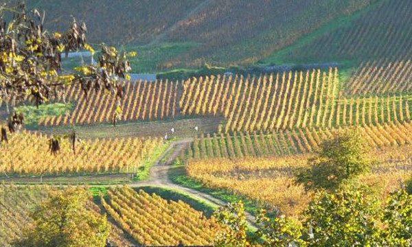 chambolle-musigny-borboña-viñedos