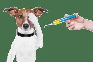 Vaccinatie bij honden is een belangrijke en effectieve manier om besmettelijke honden ziekten te voorkomen