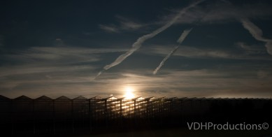 Westland-De Lier-7