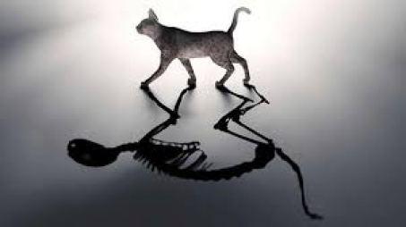 gato de schrodinger 2