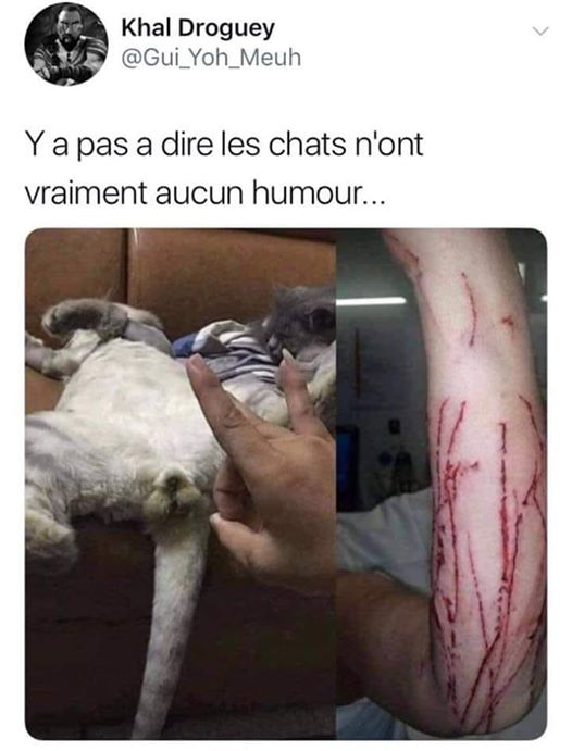 Chat Drole Fun Humour 4 Animaaaaals