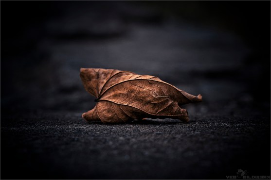 The Loneliness of the fallen Leaves