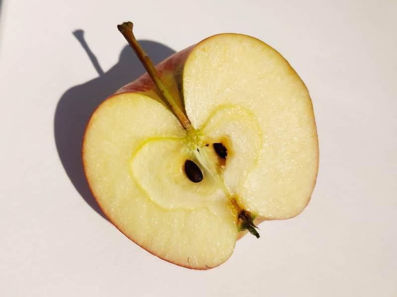 Une moitié de pomme photographiée