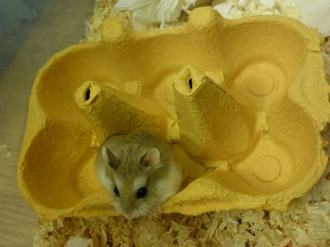 Hamster or egg?!