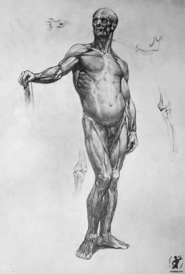 Drawing In The High Art School book - pencil man ecorche