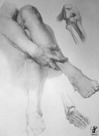 Drawing In The High Art School book - pencil leg anatomy 01
