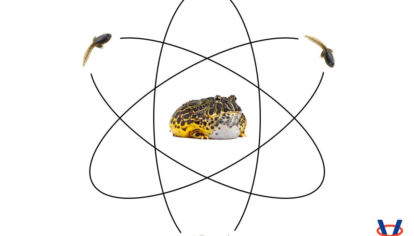 Biologické vplyvy kvantových javov