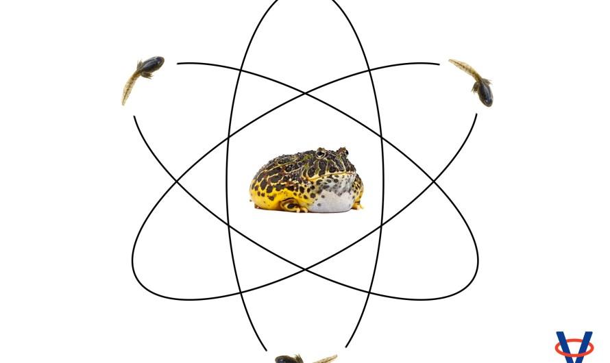 Kvantová biológia