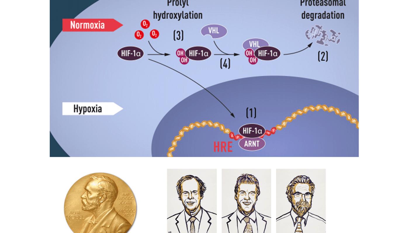 Nobelová cena za medicínu a fyziológiu